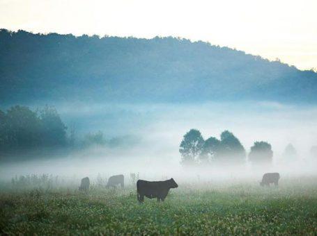 Farm and Lifestyle Centre